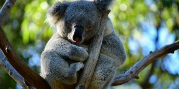 niezapomniana Australia